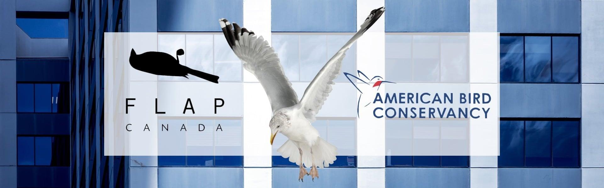 Bird deterrent film Berkayly Pellicules pour fenêtres